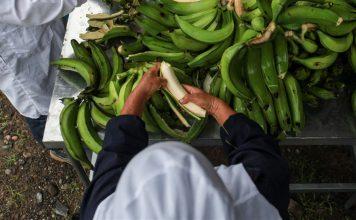 Mipymes y productores de banano podrán aumentar posibilidades de internacionalización